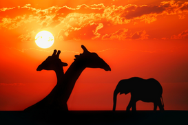Animal Pictures Wall Art as Canvas, Acrylic or Metal Print African animals