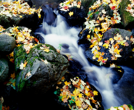 River, Lake & Waterfall Pictures Wall Art as Canvas, Acrylic or Metal Print Fall leaves