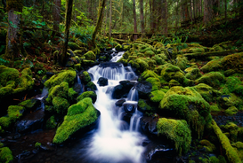 Fall pictures Wall Art as Canvas, Acrylic or Metal Print Moss-covered rocks in creek with small waterfall, Olympic National Park, Washington, USA